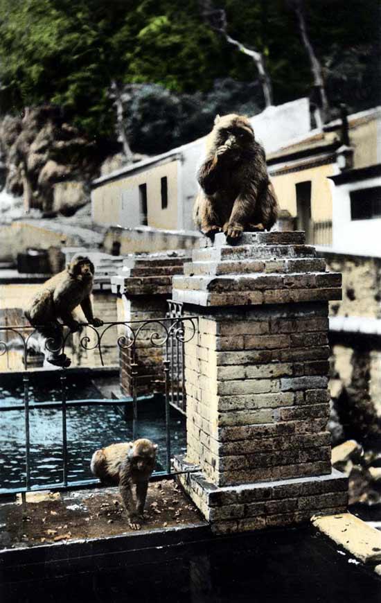 MEDEA-Les-singes-au-Ruissea